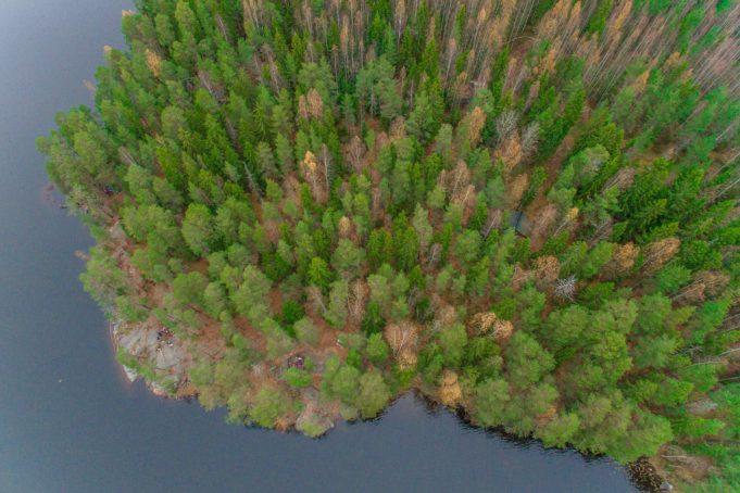 Kuva Birgitan polun metsistä