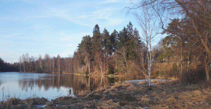 kuva järvelle päin