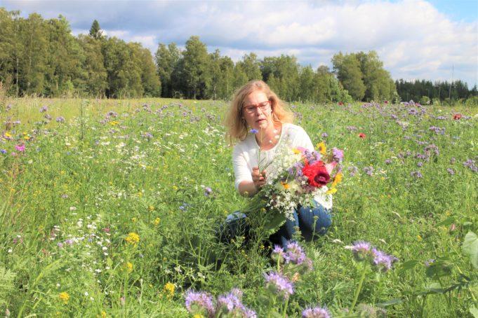 Kunnanjohtaja Heidi Rämö maisemakukkapellolla poimimassa kukkakimppua.